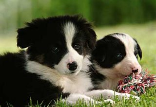 border collie name ideas