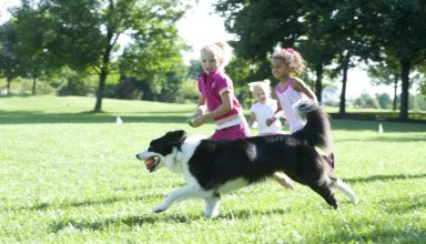 border collie with kids