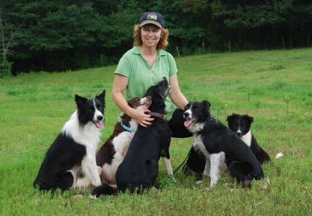 border collie dog trainer