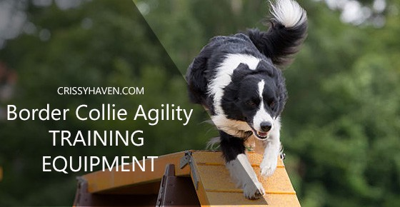 border collie agility training equipment