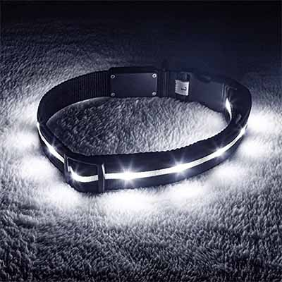 Blazin Safety LED Dog Collar